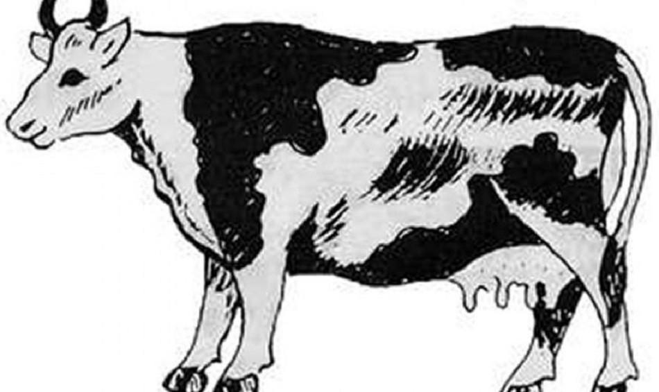मोरङका किसानले गाई मर्दा तीन दिन जुठो बारे