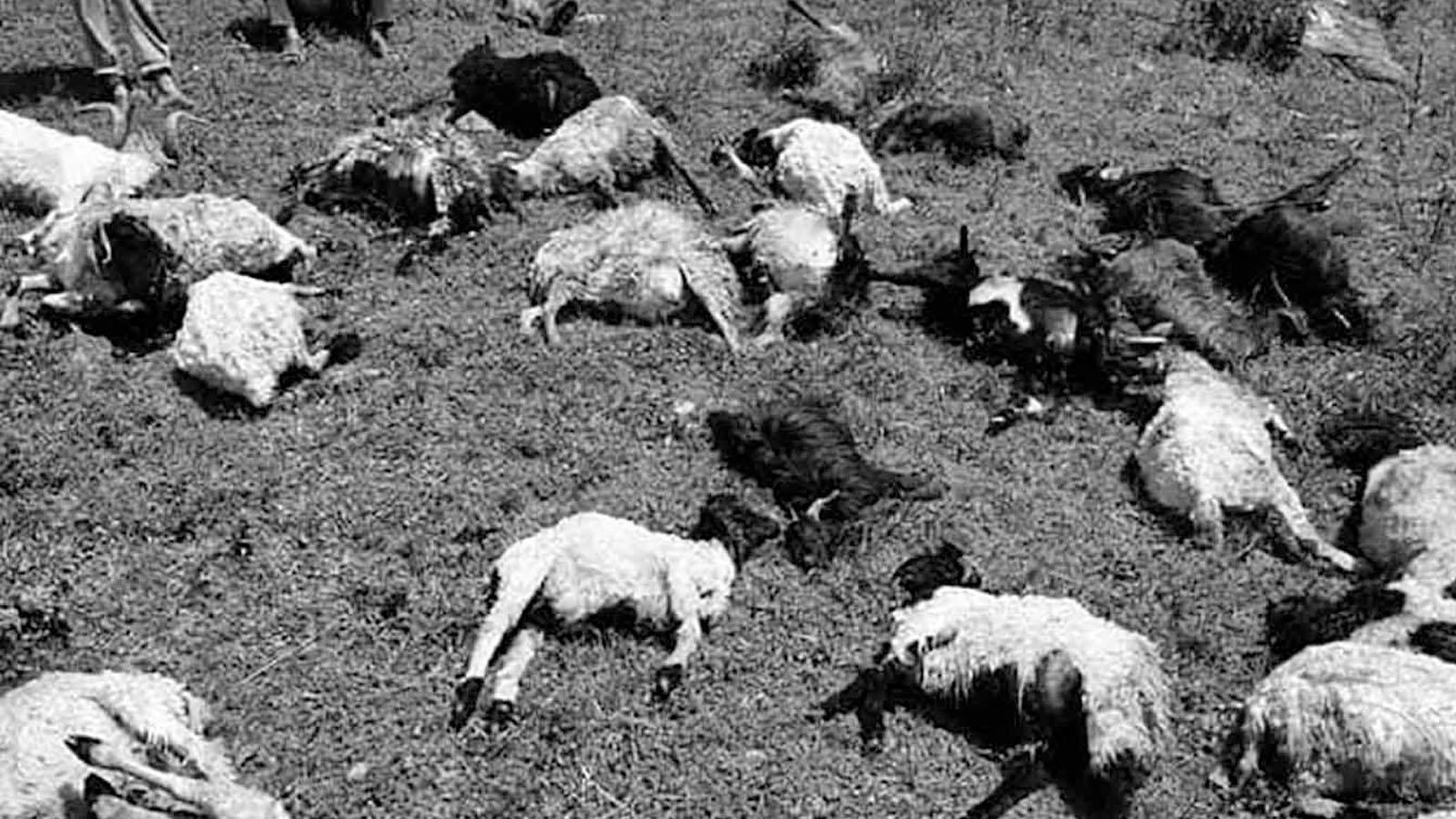 जुम्लामा चट्याङमा परेर ४० भेडा मरे, साढे ६ लाखको क्षती