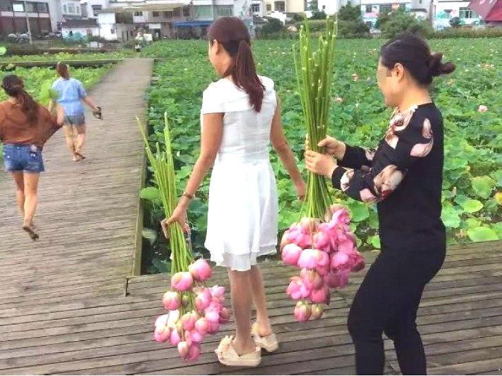 पर्यटकले कमल फूल चोरेपछि इको पार्क बन्द