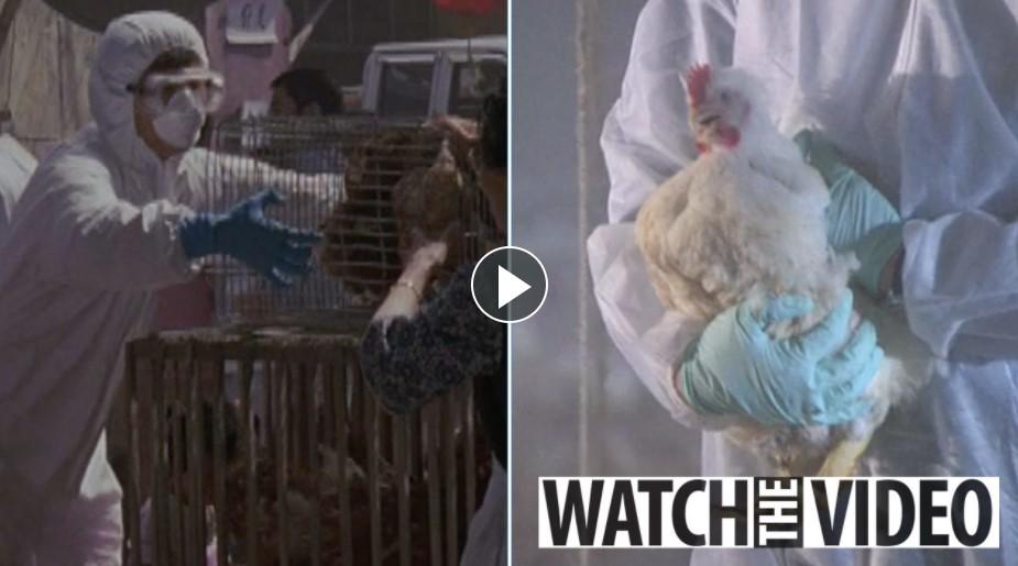 चीनमा देखियो नयाँ प्रकारको भाइरस, पहिलो पटक मानिसमा सङ्क्रमण