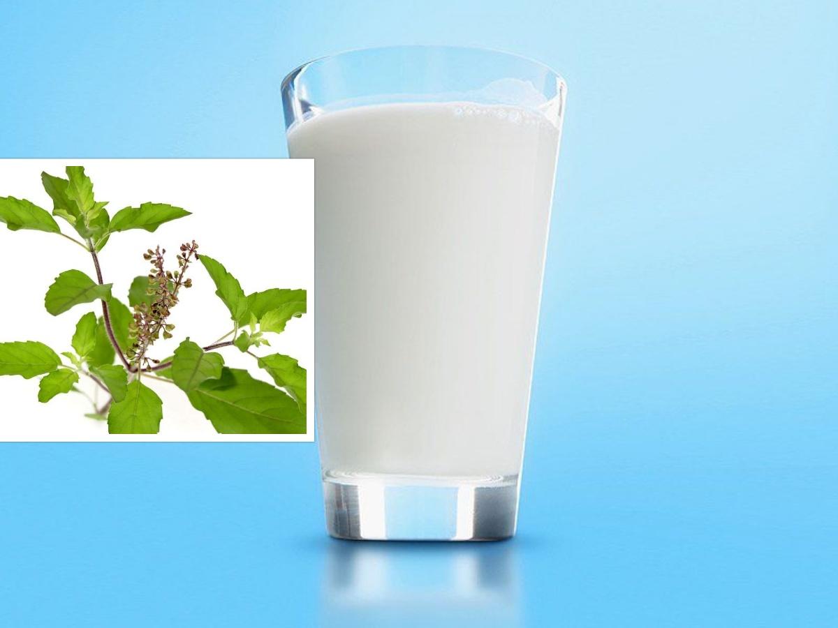 यस्तो छ, तुलसी मिश्रित दूध पिउनुको फाइदा