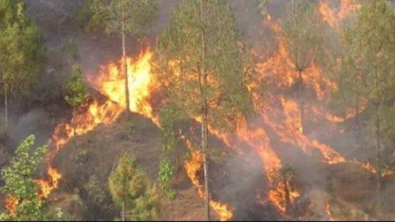 आगलागीबाट करोडौँको वन पैदावार नष्ट