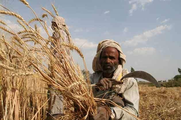 धनुषाका किसानहरु गहुंबाली भित्रयाउन चटारो